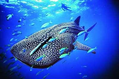 海中最大的动物